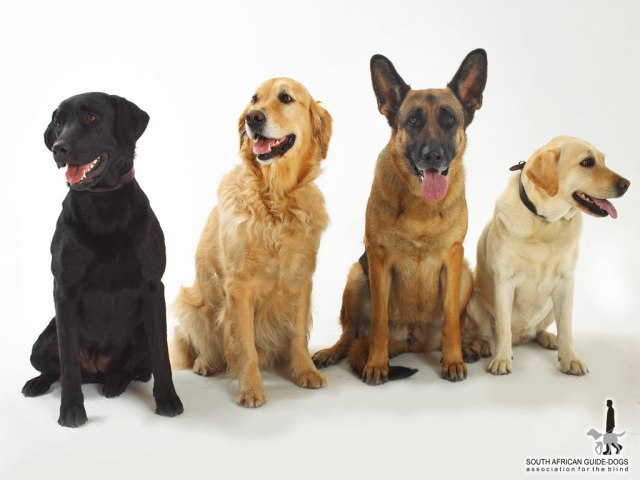 Beautiful_Dogs_Wallpaper_6sufg