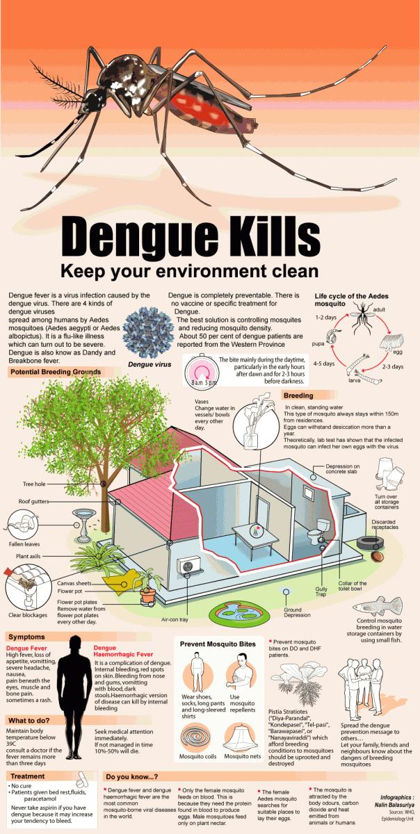Dengue-Infographic