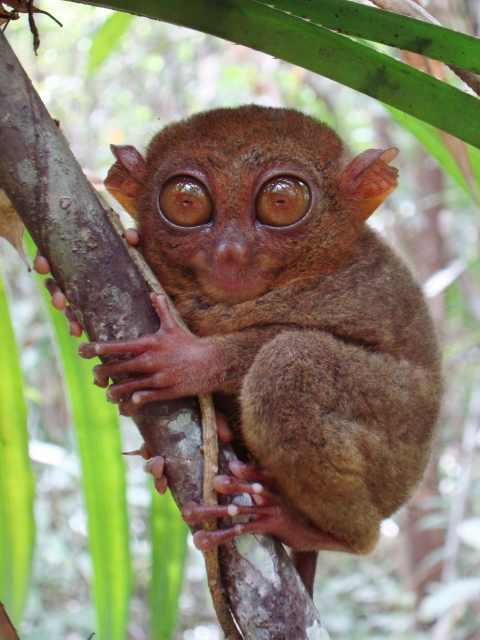 photo from: birding2asia.com