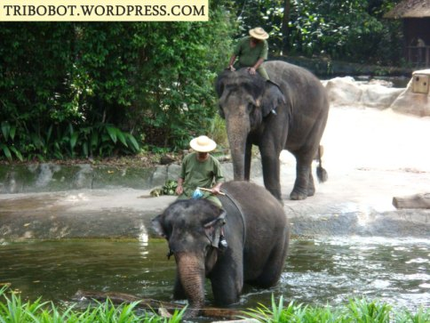Our Visit in Singapore Zoo