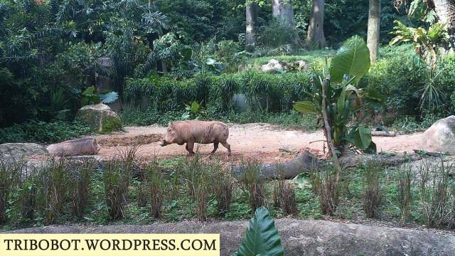 Pumbaa's here! Hakuna Matata