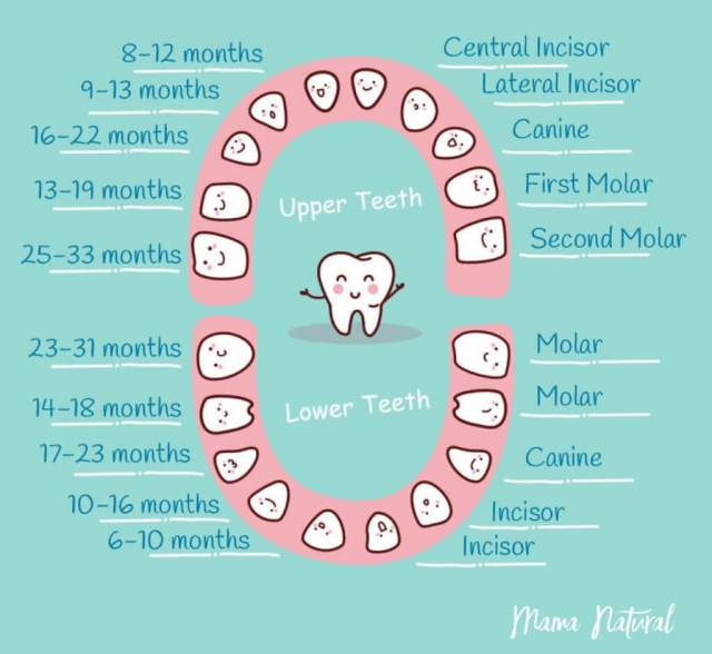 Baby-Teeth-Chart-What-Order-Do-They-Come-In-chart-by-Mama-Natural-1024x942.jpg